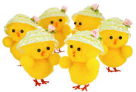 Easter Chicks with Sun Hat   TNW Australia