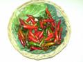 Chillies (kilo)