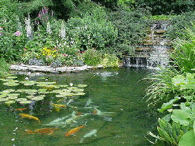 Fish and farm pond supplies and maintenance information for Farm pond maintenance