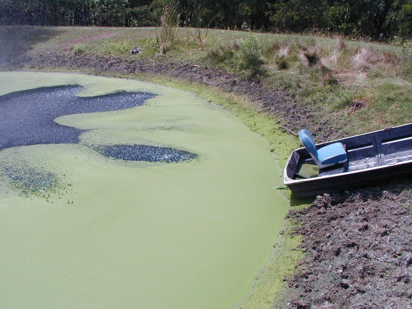 pond-algae3.jpg