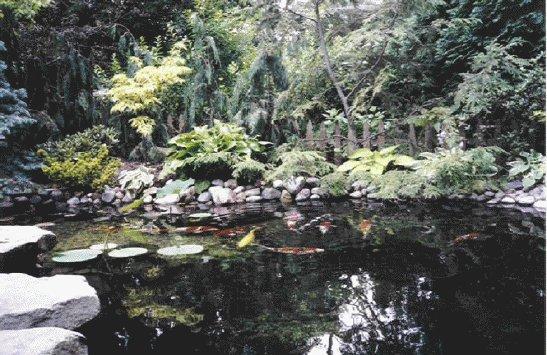 pond-fish.jpg