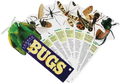 Bugs (Fandex Family Guide)