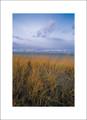 Beach Grass| Salt Camp| Oregon