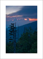 Evening and Firs, Clingmans Dome