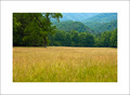 Field, Cataloochee