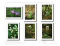 Note Cards - Great Smoky Mountains Set #3 Wild Flowers