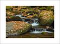 Roaring Fork Creek