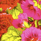Ainsley Floral blue sky scrubs Poppy Scrub Cap