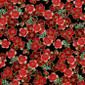 Relentlessly Red Pixie Scrub Cap - Image Variant_0