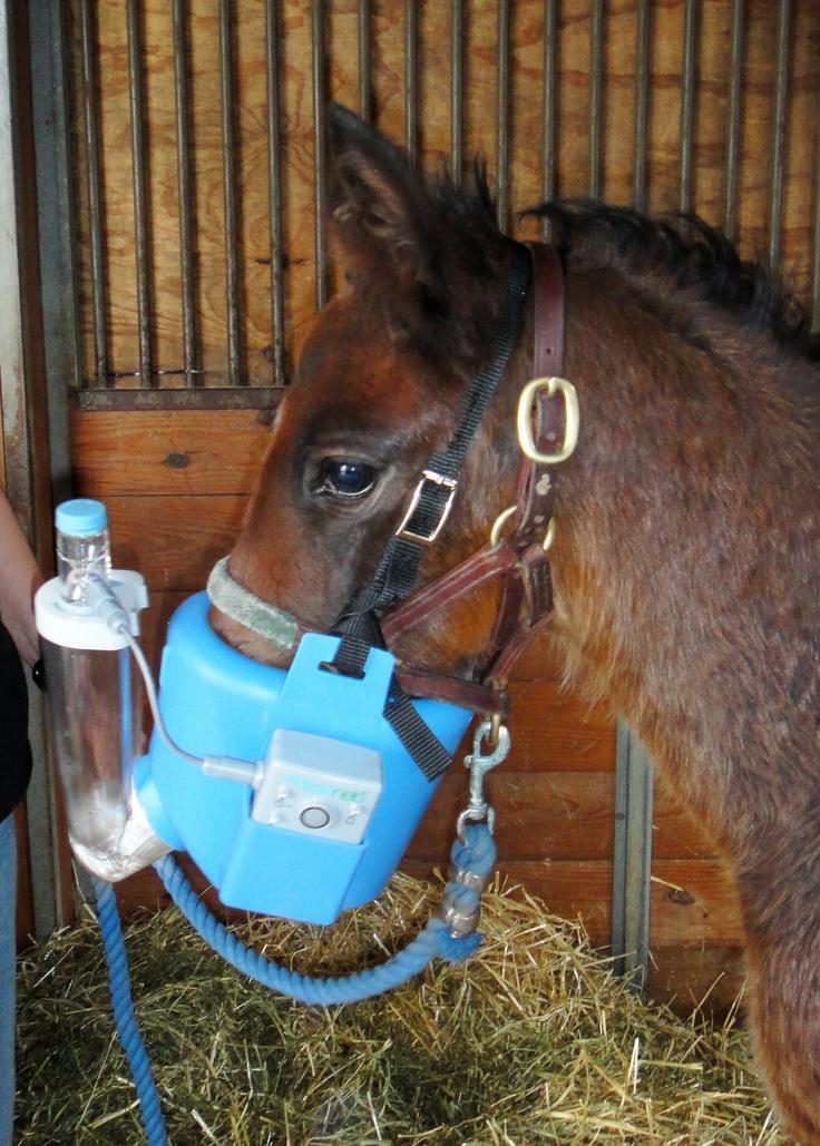 Flexineb equine nebuliser