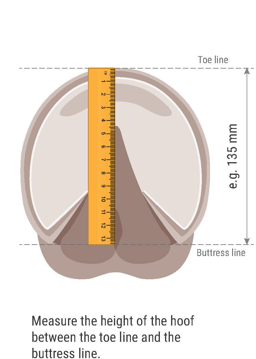 measuring-hoof-diagram-for-boots-for-no-table-2-02.jpg