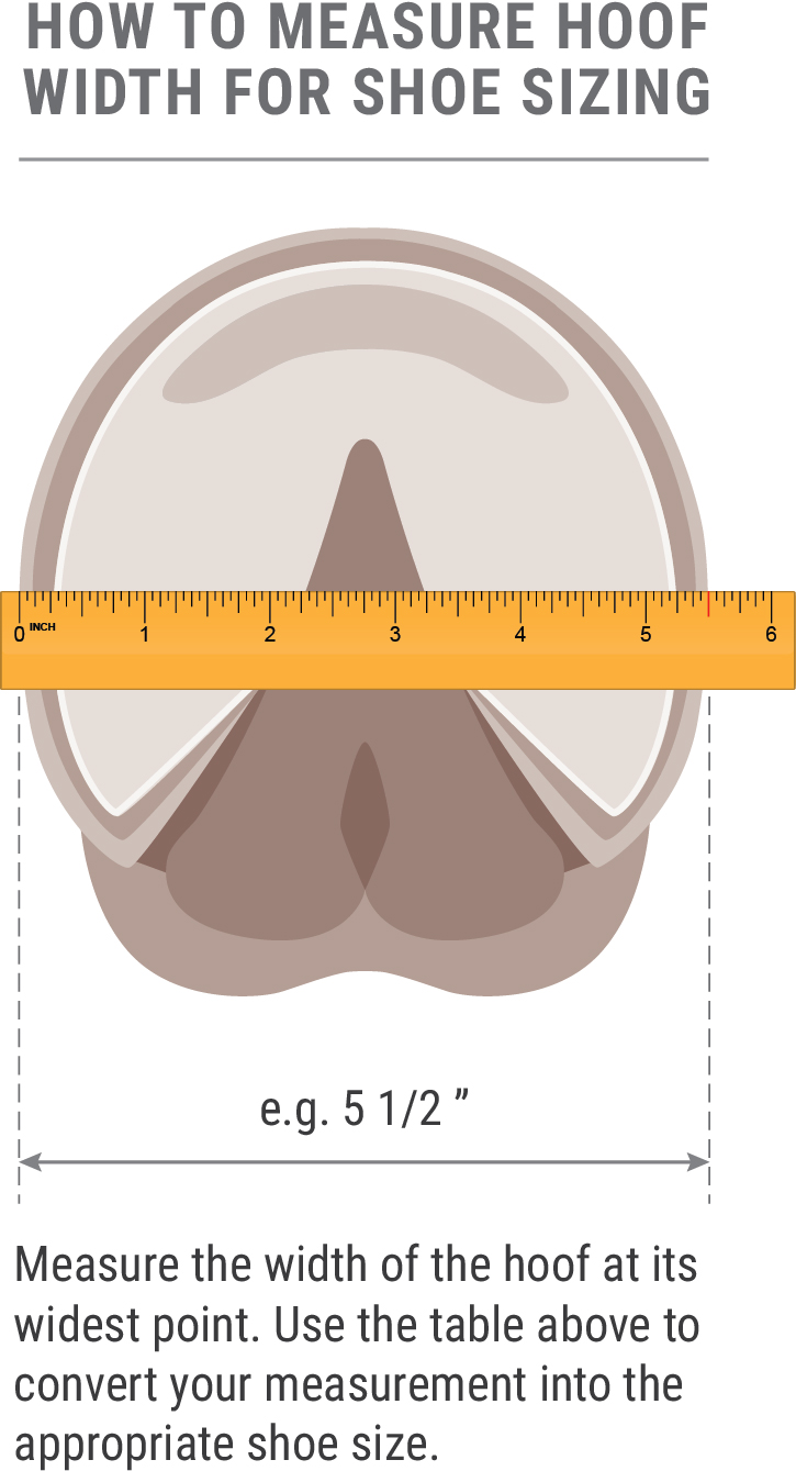 measuring-hoof-diagram-for-boots-for-no-table-3-02.jpg