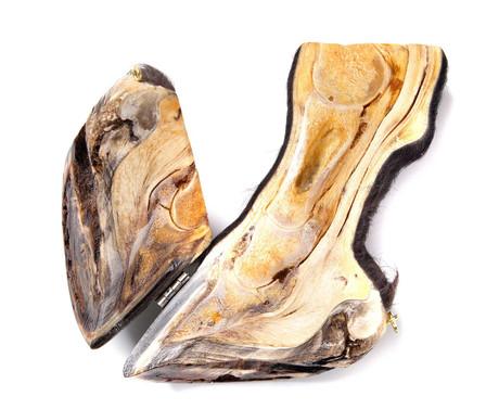 3D hinged hoof model specimen