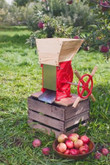 Fruit and Apple Crusher