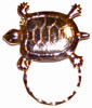 SPEC pin large Turtle