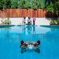 Sparks - Hippopotamus - Limited Edition Picture Disc 2xLP + Digital Download