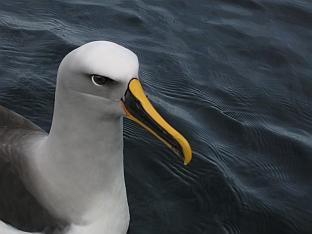 birdsz.jpg