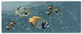 TROPICAL FISH TANK INDOOR OUTDOOR RUG - 2' X 5' RUNNER - AQUARIUM RUG