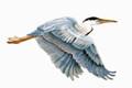 LARGE FLYING BLUE HERON METAL WALL SCULPTURE - COASTAL & NAUTICAL WALL ART - FREE SHIPPING*