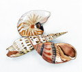 SEASHELL TRIO METAL WALL SCULPTURE - NAUTICAL DECOR - SHELLS