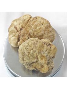 Fresh Italian White Truffles