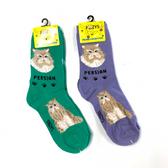 Persian Feline Cat Foozys Socks FFC-14