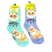 Exotic Shorthair Feline Cat Foozys Socks FFC-09