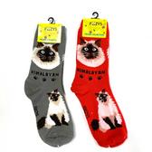 Himalayan Feline Cat Foozys Socks FFC-10