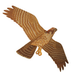 Jackites - Peregine Falcon