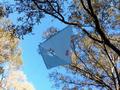 iFlite kites - iFlite Vented