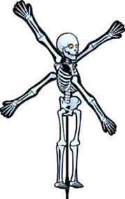 Small Skeleton Spinner