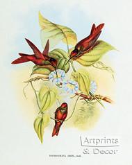 Diphogena Iris - Hummingbird by John Gould - Art Print