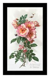 Wild Roses by Paul de Longpre - Framed Art Print