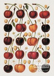 Cherries - Art Print