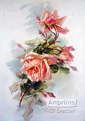 Light Pink Roses by Catherine Klein - Art Print