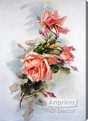 Light Pink Roses by Catherine Klein - Stretched Canvas Art Print