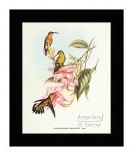 Chrysobronchus Virescens - Framed Art Print
