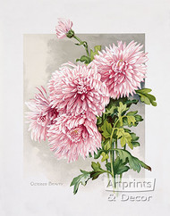 October Beauty by James Callowhill - Art Print