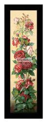 Study of Roses - Framed Art Print