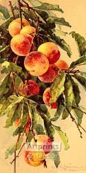 Peaches by Catherine Klein - Art Print