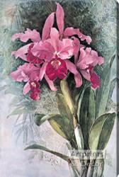 Orchids by Paul de Longpre - Stretched Canvas Art Print