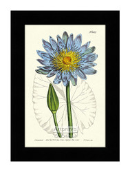 Blue Water Lily - Framed Art Print*
