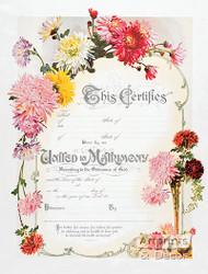 Chrysanthemum Marriage Certificate - Art Print