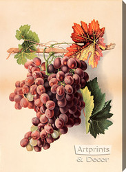 Grapes - Stretched Canvas Art Print