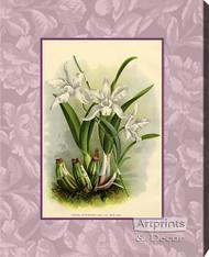 White Orchids - Canvas Art Print