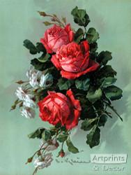 Red & White Roses - Art Print
