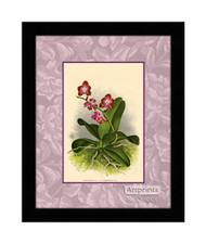 Rose Orchids - Framed Art Print