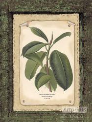 Rubber Plant - Art Print