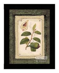Ficus - Framed Art Print
