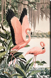 Pink Flamingos - Stretched Canvas Art Print